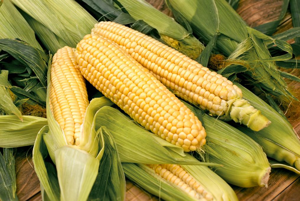 Izvoz u Kinu može da poveća cenu kukuruza