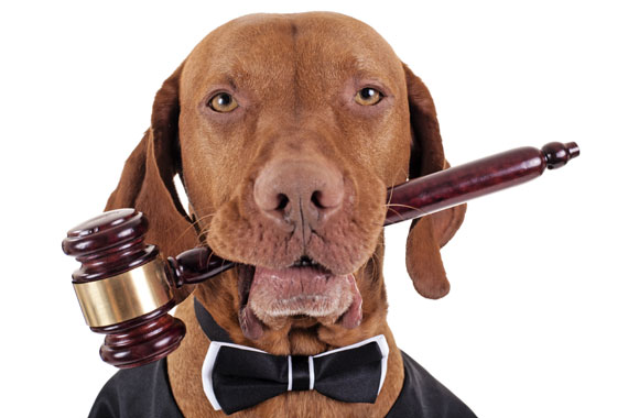 Kako je Zakon o dostupnosti informacija od javnog značaja ugrozio veterinare