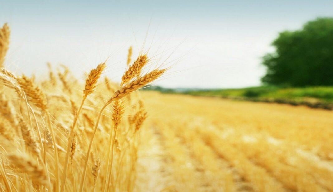 Srpska poljoprivreda oborila rekorde